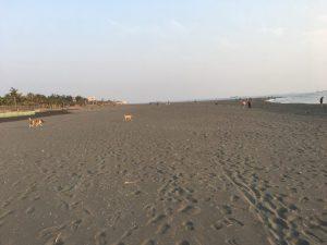 旗津半島ビーチ野良犬