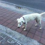 ヌサドゥアビーチ散策!眉毛犬とバリのマンホール事情